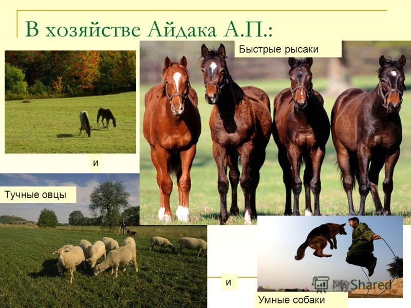 В хозяйстве Айдака А.П.: Быстрые рысаки и Тучные овцы и Умные собаки