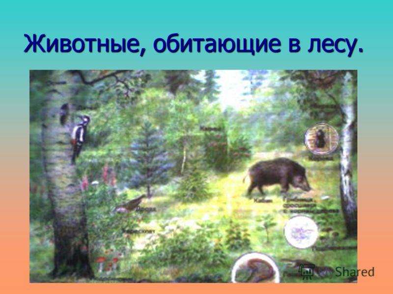 Животные, обитающие в лесу.