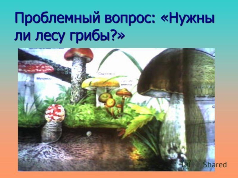Проблемный вопрос: «Нужны ли лесу грибы?»