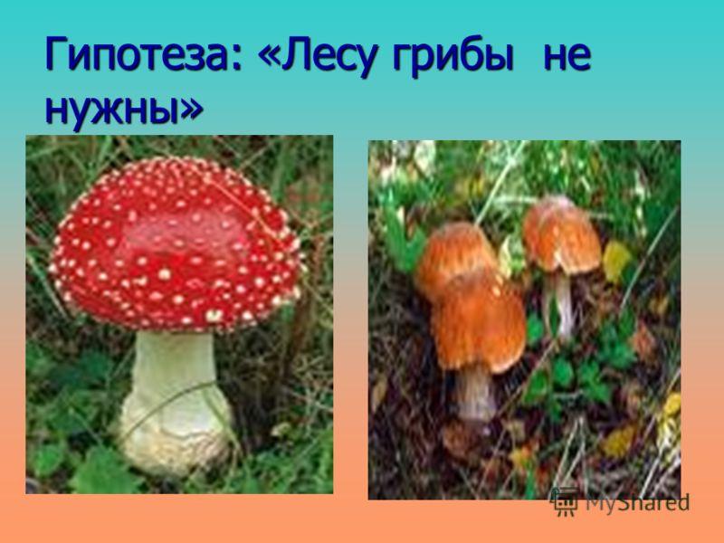 Гипотеза: «Лесу грибы не нужны»