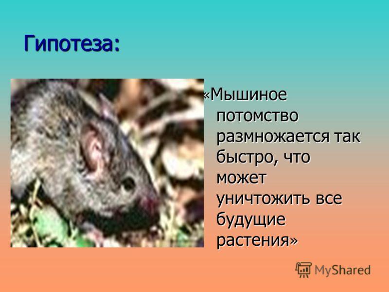 Гипотеза: « Мышиное потомство размножается так быстро, что может уничтожить все будущие растения »