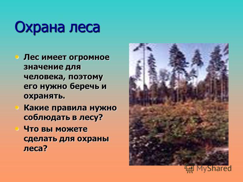 Охрана леса Лес имеет огромное значение для человека, поэтому его нужно беречь и охранять. Лес имеет огромное значение для человека, поэтому его нужно беречь и охранять. Какие правила нужно соблюдать в лесу? Какие правила нужно соблюдать в лесу? Что