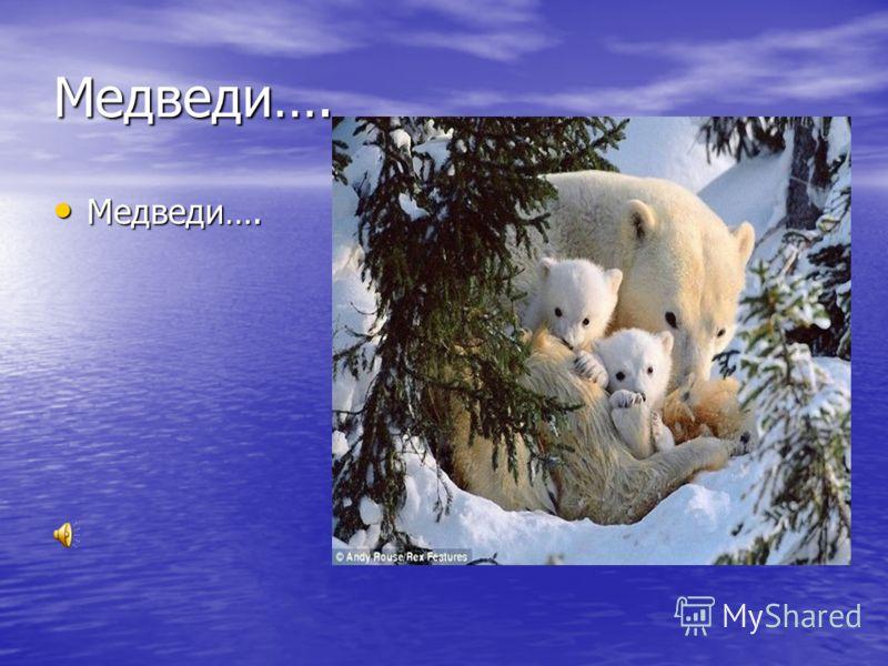 Медведи…. Медведи…. Медведи….