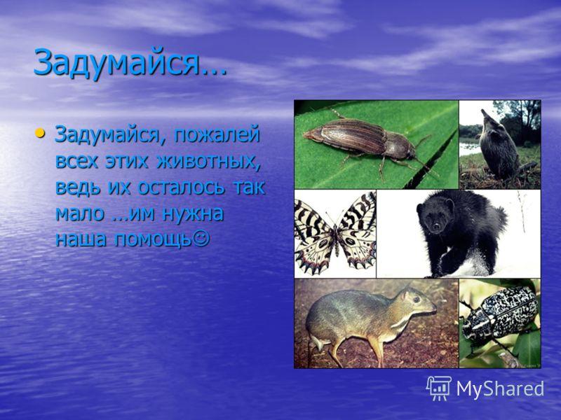 Задумайся… Задумайся, пожалей всех этих животных, ведь их осталось так мало …им нужна наша помощь Задумайся, пожалей всех этих животных, ведь их осталось так мало …им нужна наша помощь