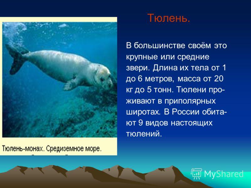 Тюлень. В большинстве своём это крупные или средние звери. Длина их тела от 1 до 6 метров, масса от 20 кг до 5 тонн. Тюлени про- живают в приполярных широтах. В России обита- ют 9 видов настоящих тюлений.