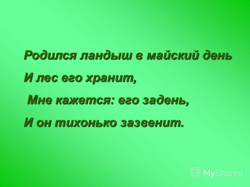 Родился ландыш в майский день И лес его хранит, Мне кажется: его задень, Мне кажется: его задень, И он тихонько зазвенит.