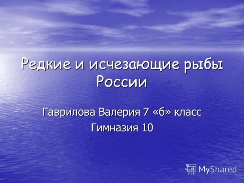 Редкие и исчезающие рыбы России Гаврилова Валерия 7 «б» класс Гимназия 10
