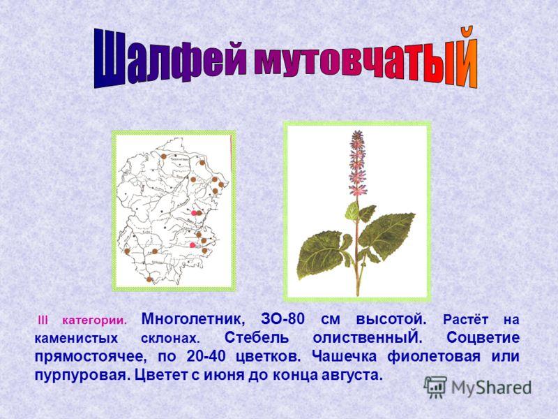 III категории. Многолетник, ЗО-80 см высотой. Растёт на каменистых склонах. Стебель олиственныЙ. Соцветие прямостоячее, по 20-40 цветков. Чашечка фиолетовая или пурпуровая. Цветет с июня до конца августа.