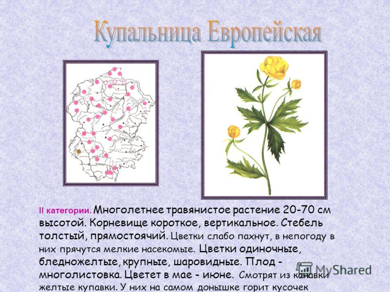 II категории. Многолетнее травянистое растение 20-70 см высотой. Корневище короткое, вертикальное. Стебель толстый, прямостоячий. Цветки слабо пахнут, в непогоду в них прячутся мелкие насекомые. Цветки одиночные, бледножелтые, крупные, шаровидныe. Пл