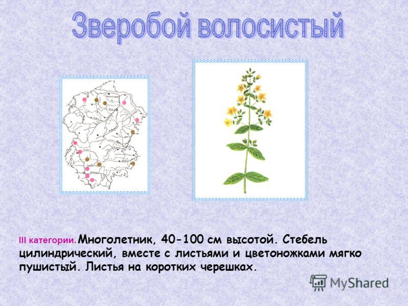 III категории. Многолетник, 40-100 см высотой. Стебель цилиндрический, вместе с листьями и цветоножками мягко пушистый. Листья на коротких черешках.