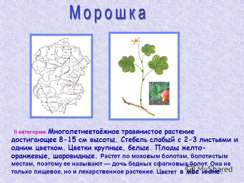 II категории. Многолетнеетаёжное травянистое растение достигающее 8-15 см высоты. Стебель слабый с 2-3 листьями и одним цветком. Цветки крупные, белые. Плоды желто- оранжевые, шаровидные. Растет по моховым болотам, болотистым местам, поэтому ее назыв