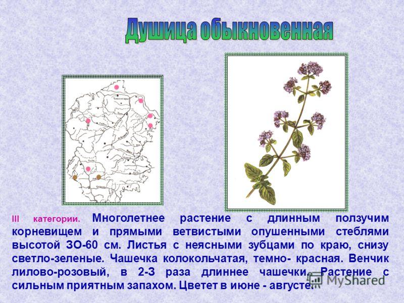 III категории. Многолетнее растение с длинным ползучим корневищем и прямыми ветвистыми опушенными стеблями высотой ЗО-60 см. Листья с неясными зубцами по краю, снизу светло-зеленые. Чашечка колокольчатая, темно- красная. Венчик лилово-розовый, в 2-З