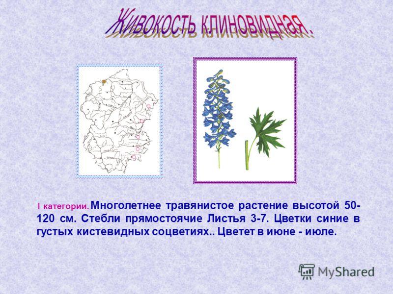 I категории. Многолетнее травянистое растение высотой 50- 120 см. Стебли прямостоячие Листья 3-7. Цветки синие в густых кистевидных соцветиях.. Цветет в июне - июле.