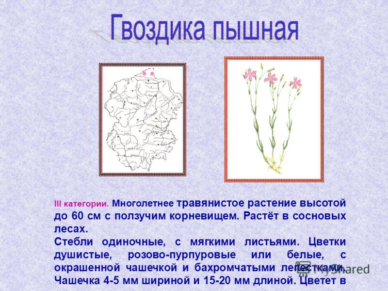 III категории. Многолетнее травянистое растение высотой до 60 см с ползучим корневищем. Растёт в сосновых лесах. Стебли одиночные, с мягкими листьями. Цветки душистые, розово-пурпуровые или белые, с окрашенной чашечкой и бахромчатыми лепестками. Чаше