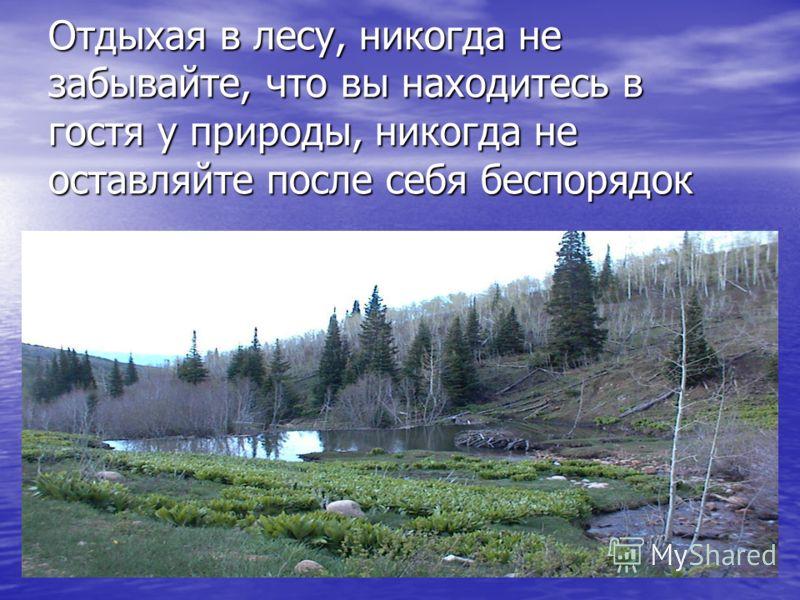 Отдыхая в лесу, никогда не забывайте, что вы находитесь в гостя у природы, никогда не оставляйте после себя беспорядок