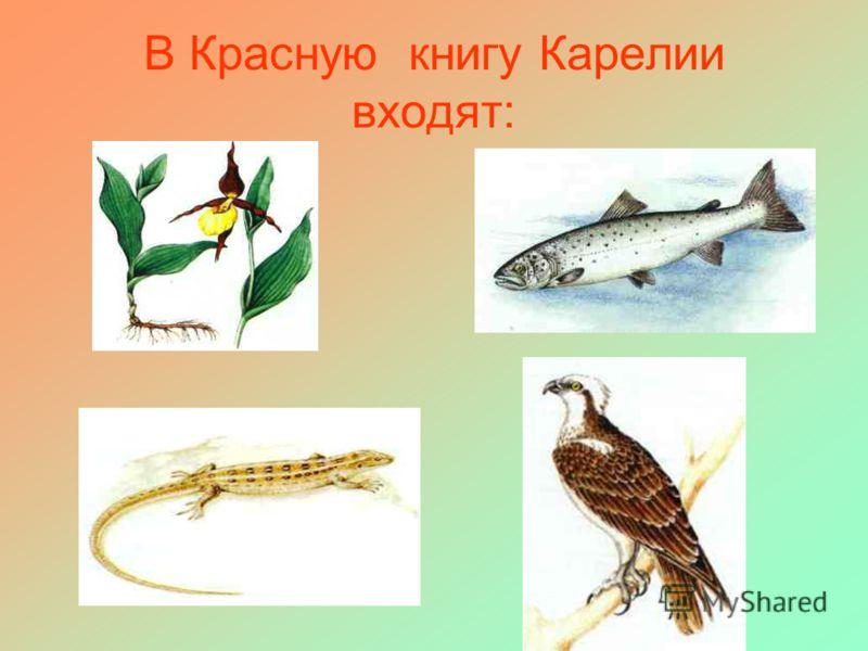 В Красную книгу Карелии входят: