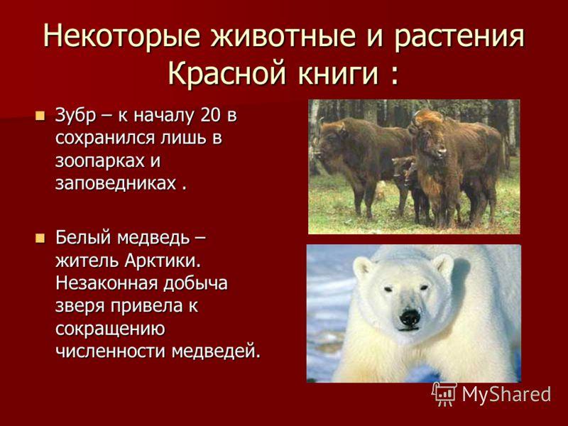 Некоторые животные и растения Красной книги : Зубр – к началу 20 в сохранился лишь в зоопарках и заповедниках. Зубр – к началу 20 в сохранился лишь в зоопарках и заповедниках. Белый медведь – житель Арктики. Незаконная добыча зверя привела к сокращен