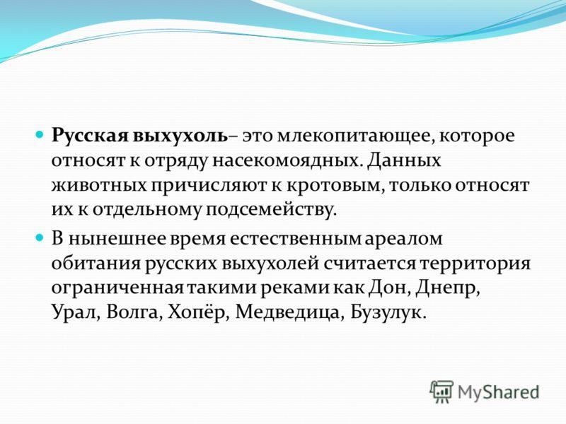 Русская выхухоль– это млекопитающее, которое относят к отряду насекомоядных. Данных животных причисляют к кротовым, только относят их к отдельному подсемейству. В нынешнее время естественным ареалом обитания русских выхухолей считается территория огр