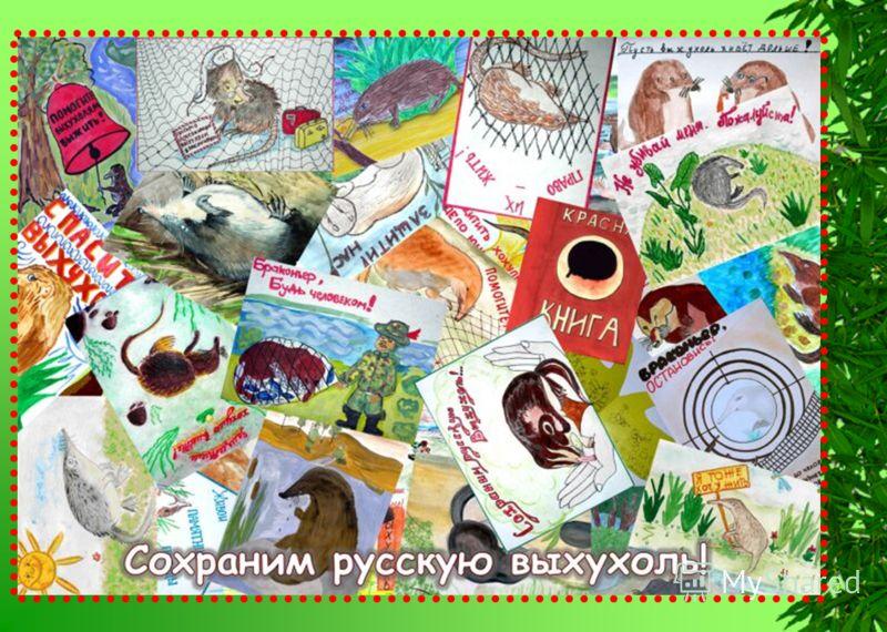 Литература http://www.ohotniki.com/new/69.htm http://ru.wikipedia.org/wiki/Desmana_moschata http://images.yandex.ru/ http://www.biodiversity.ru/publications/odp/archive/21/03hanin.html http://www.biodiversity.ru/programs/vyhuhol-main.html Комкова Ири