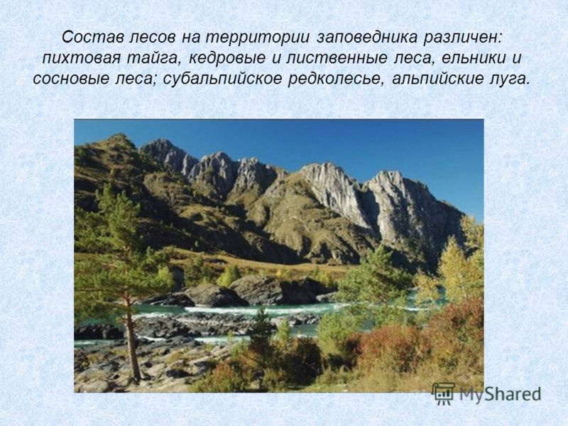 Состав лесов на территории заповедника различен: пихтовая тайга, кедровые и лиственные леса, ельники и сосновые леса; субальпийское редколесье, альпийские луга.