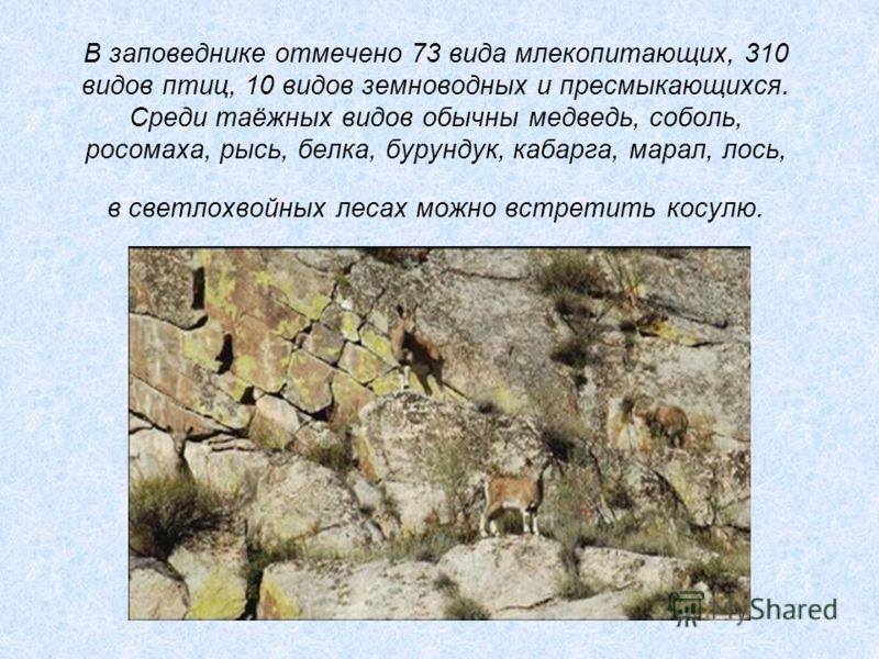 В заповеднике отмечено 73 вида млекопитающих, 310 видов птиц, 10 видов земноводных и пресмыкающихся. Среди таёжных видов обычны медведь, соболь, росом