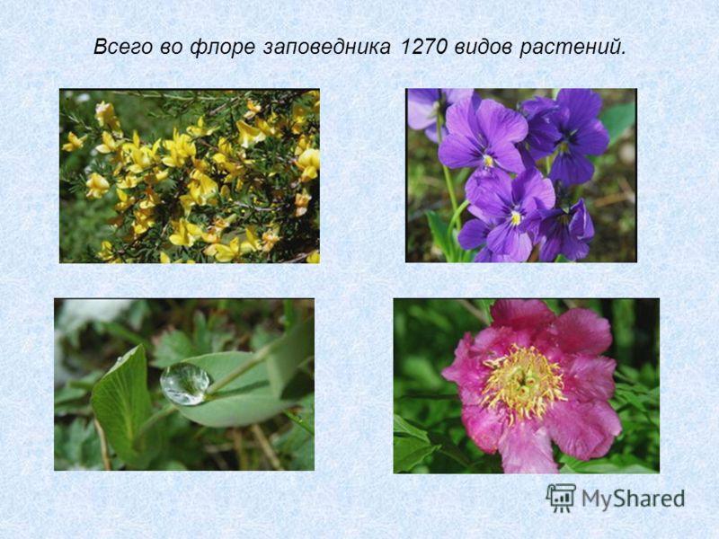 Всего во флоре заповедника 1270 видов растений.
