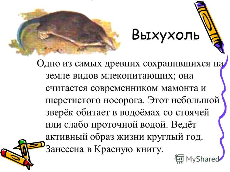 Выхухоль Одно из самых древних сохранившихся на земле видов млекопитающих; она считается современником мамонта и шерстистого носорога. Этот небольшой зверёк обитает в водоёмах со стоячей или слабо проточной водой. Ведёт активный образ жизни круглый г