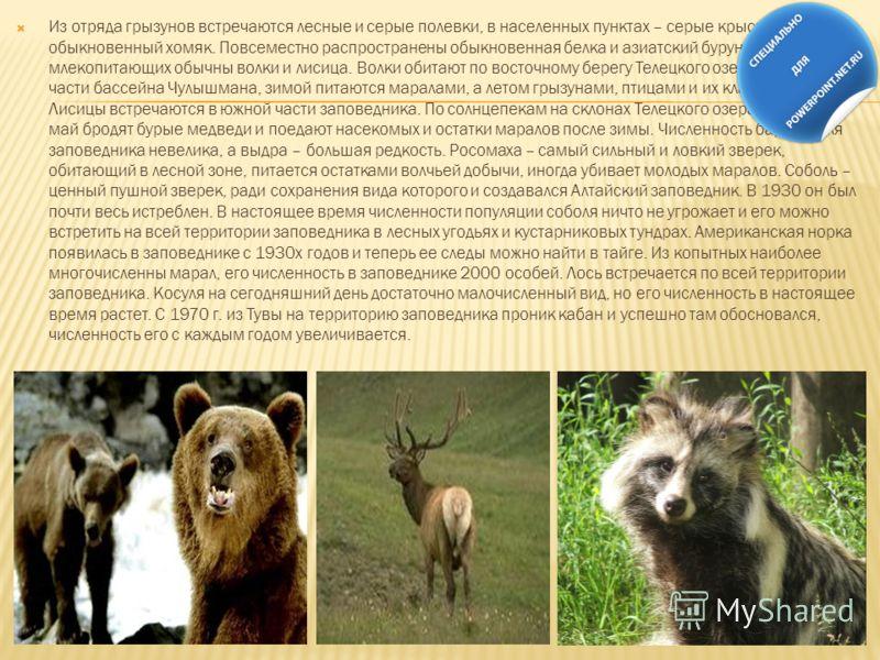Из отряда грызунов встречаются лесные и серые полевки, в населенных пунктах – серые крысы и обыкновенный хомяк. Повсеместно распространены обыкновенная белка и азиатский бурундук. Из хищных млекопитающих обычны волки и лисица. Волки обитают по восточ