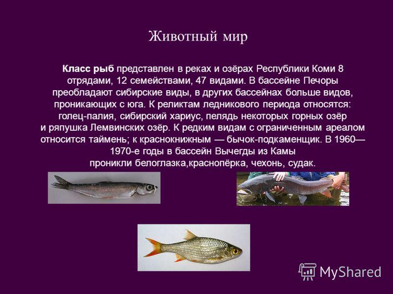 Животный мир Класс рыб представлен в реках и озёрах Республики Коми 8 отрядами, 12 семействами, 47 видами. В бассейне Печоры преобладают сибирские виды, в других бассейнах больше видов, проникающих с юга. К реликтам ледникового периода относятся: гол