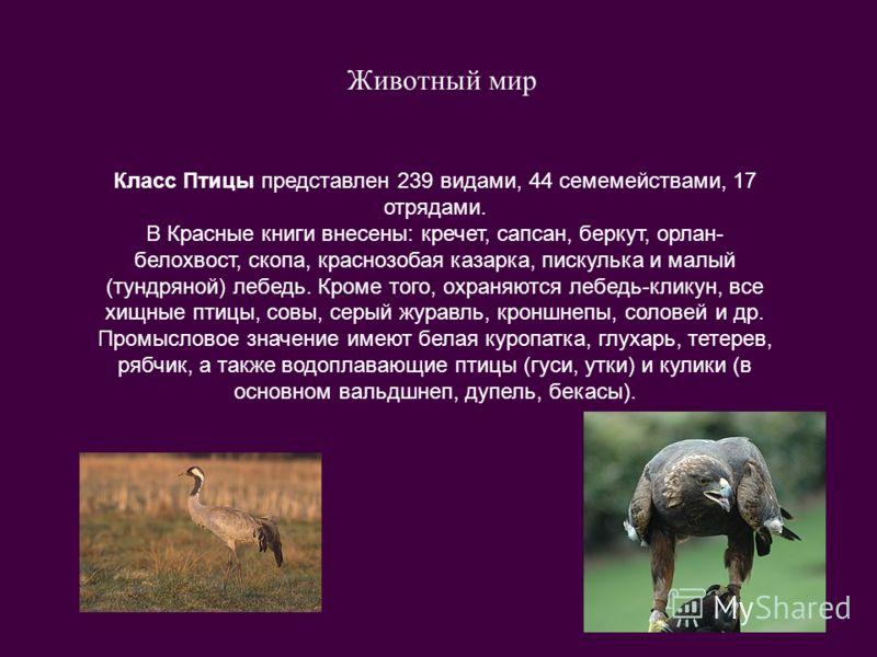 Животный мир Класс Птицы представлен 239 видами, 44 семемействами, 17 отрядами. В Красные книги внесены: кречет, сапсан, беркут, орлан- белохвост, скопа, краснозобая казарка, пискулька и малый (тундряной) лебедь. Кроме того, охраняются лебедь-кликун,