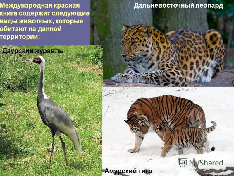 Международная красная книга содержит следующие виды животных, которые обитают на данной территории: Дальневосточный леопард Даурский журавль Амурский тигр