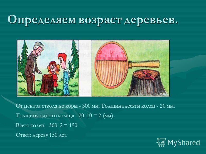 Определяем возраст деревьев. От центра ствола до коры - 300 мм. Толщина десяти колец - 20 мм. Толщина одного кольца - 20: 10 = 2 (мм). Всего колец - 300 :2 = 150 Ответ: дереву 150 лет.