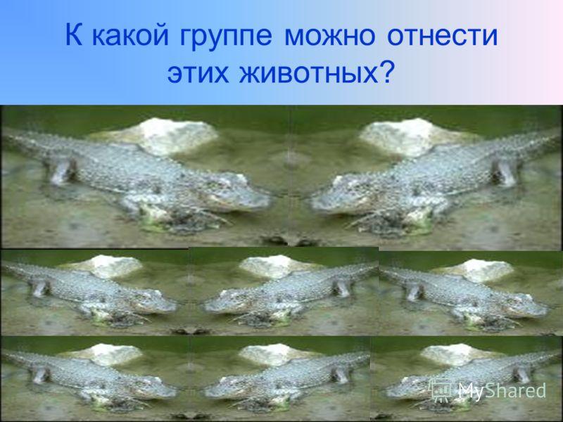 К какой группе можно отнести этих животных?