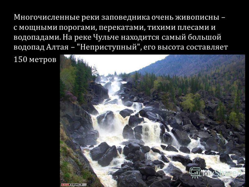 Многочисленные реки заповедника очень живописны – с мощными порогами, перекатами, тихими плесами и водопадами. На реке Чульче находится самый большой водопад Алтая – Неприступный, его высота составляет 150 метров