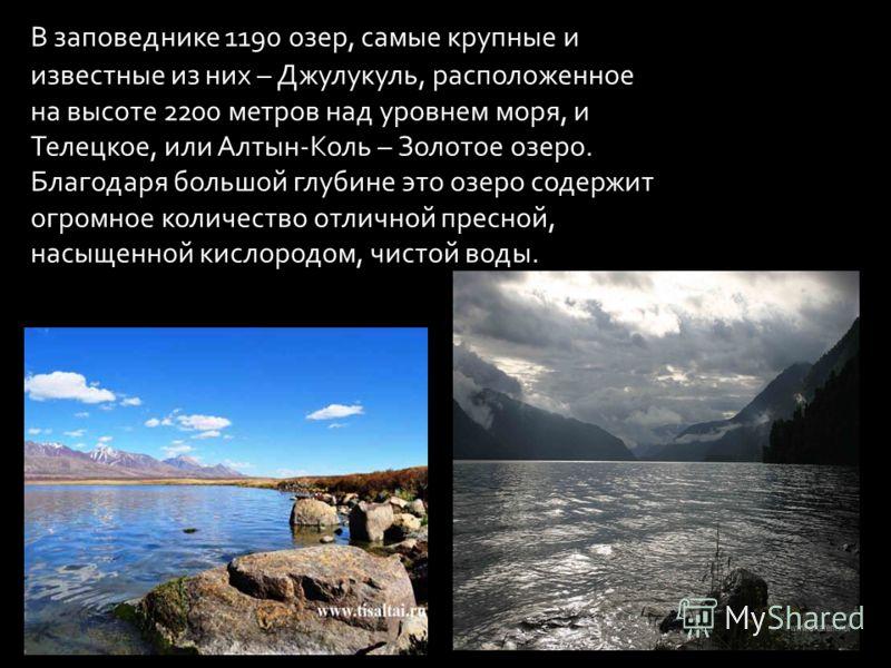 В заповеднике 1190 озер, самые крупные и известные из них – Джулукуль, расположенное на высоте 2200 метров над уровнем моря, и Телецкое, или Алтын-Коль – Золотое озеро. Благодаря большой глубине это озеро содержит огромное количество отличной пресной