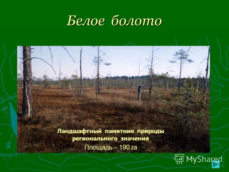 Белое болото Ландшафтный памятник природы регионального значения Площадь – 190 га