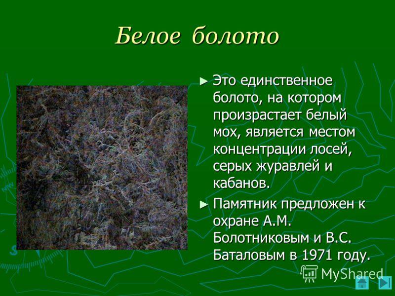Белое болото Это единственное болото, на котором произрастает белый мох, является местом концентрации лосей, серых журавлей и кабанов. Памятник предложен к охране А.М. Болотниковым и В.С. Баталовым в 1971 году.