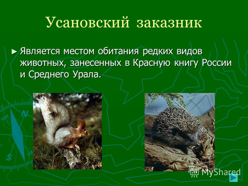 Усановский заказник Является местом обитания редких видов животных, занесенных в Красную книгу России и Среднего Урала. Является местом обитания редких видов животных, занесенных в Красную книгу России и Среднего Урала.