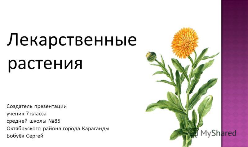 Лекарственные растения Создатель презентации ученик 7 класса средней школы 85 Октябрьского района города Караганды Бобуёк Сергей
