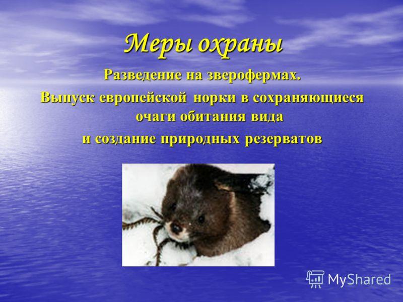 Меры охраны Разведение на зверофермах. Выпуск европейской норки в сохраняющиеся очаги обитания вида и создание природных резерватов