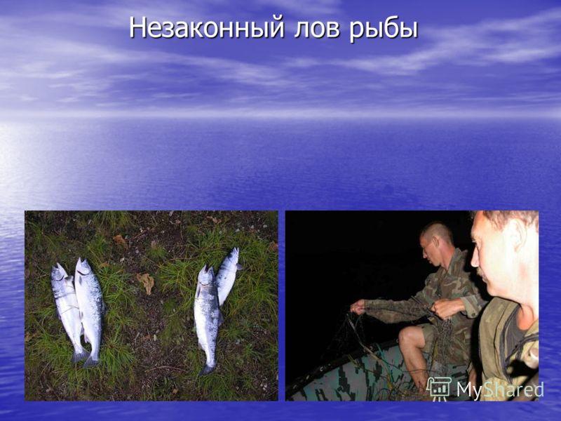 Незаконный лов рыбы