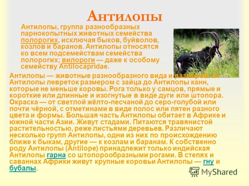 Антилопы Антилопы, группа разнообразных парнокопытных животных семейства полорогих, исключая быков, буйволов, козлов и баранов. Антилопы относятся ко всем подсемействам семейства полорогих; вилороги даже к особому семейству Antilocapridae. Антилопы ж