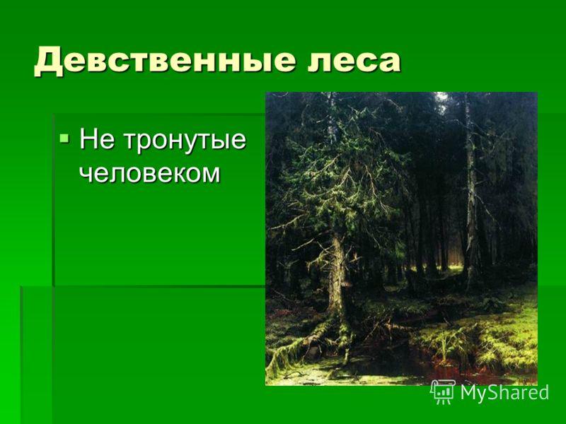 Девственные леса Не тронутые человеком