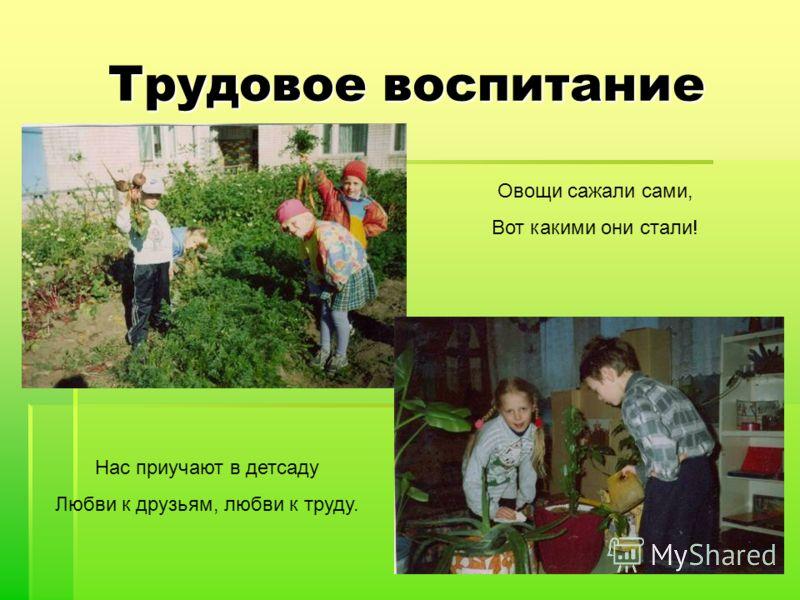 Трудовое воспитание Овощи сажали сами, Вот какими они стали! Нас приучают в детсаду Любви к друзьям, любви к труду.