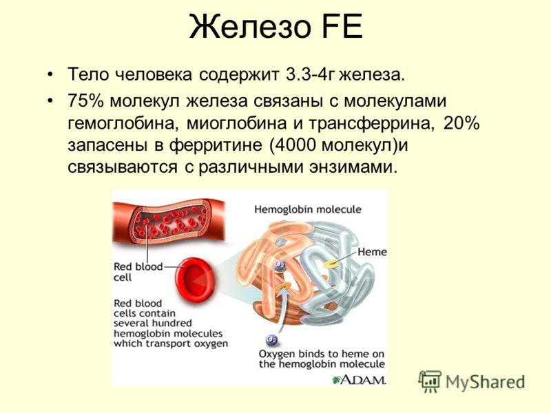 Железо FE Тело человека содержит 3.3-4г железа. 75% молекул железа связаны с молекулами гемоглобина, миоглобина и трансферрина, 20% запасены в ферритине (4000 молекул)и связываются с различными энзимами.