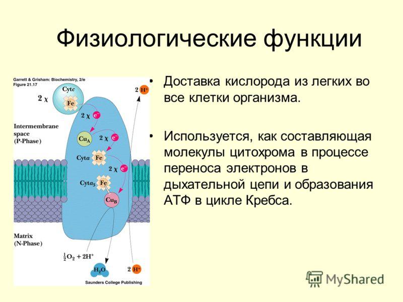 Физиологические функции Доставка кислорода из легких во все клетки организма. Используется, как составляющая молекулы цитохрома в процессе переноса электронов в дыхательной цепи и образования АТФ в цикле Кребса.