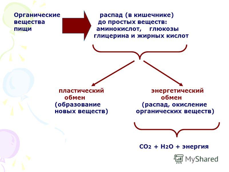 Органические распад (в кишечнике) вещества до простых веществ: пищи аминокислот, глюкозы глицерина и жирных кислот пластический энергетический обмен обмен (образование (распад, окисление новых веществ) органических веществ) СО 2 + Н 2 О + энергия