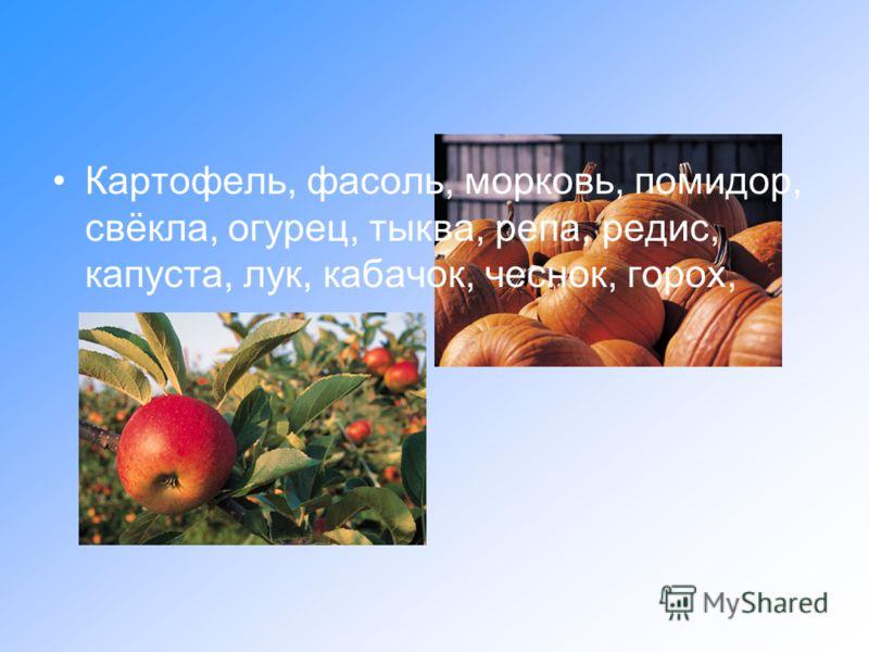 Картофель, фасоль, морковь, помидор, свёкла, огурец, тыква, репа, редис, капуста, лук, кабачок, чеснок, горох, редька.
