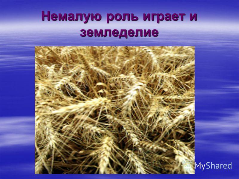 Немалую роль играет и земледелие
