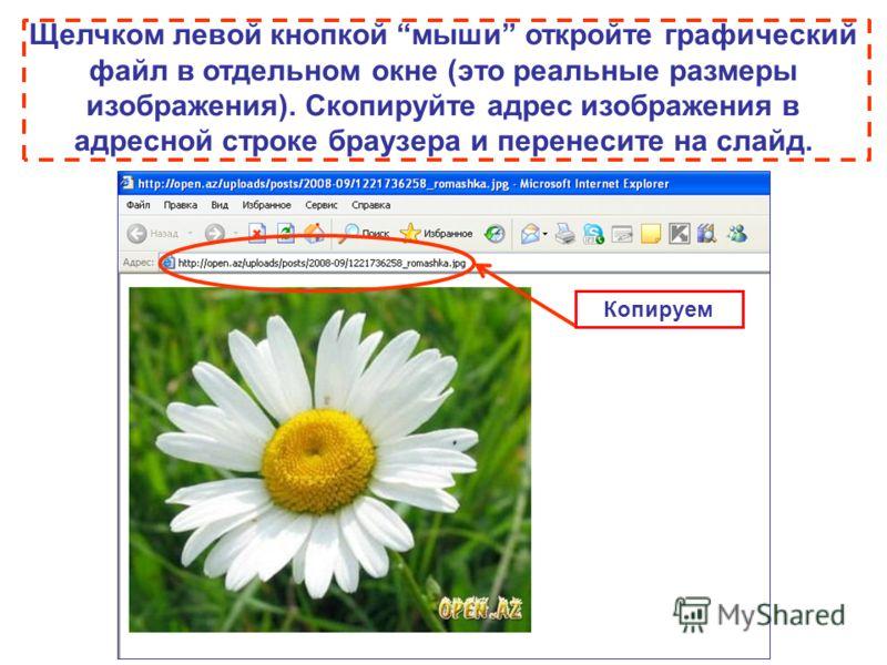 Щелчком левой кнопкой мыши откройте графический файл в отдельном окне (это реальные размеры изображения). Скопируйте адрес изображения в адресной строке браузера и перенесите на слайд. Копируем
